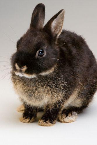 Bunny11wks